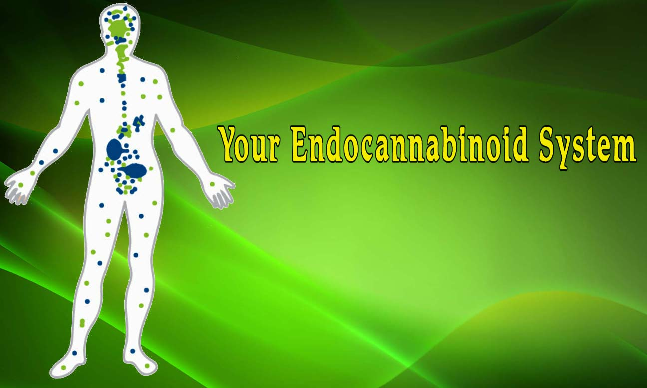 your endocannabinoid system mystical green
